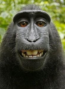 macaco_0